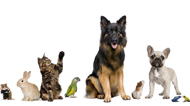 Como montar um pet shop de sucesso